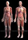 HUMAN ANATOMY AND PHYSIOLOGY E-BOOK