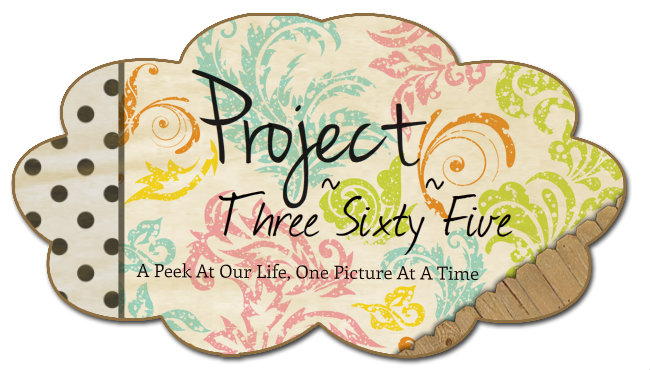 Project Three~Sixty~Five