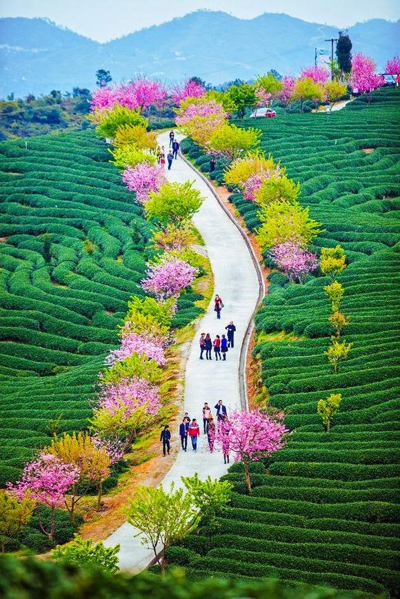 Wuhan (China)