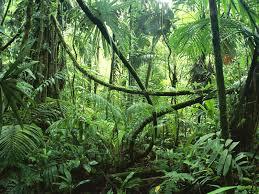 Que significa soñar con la selva