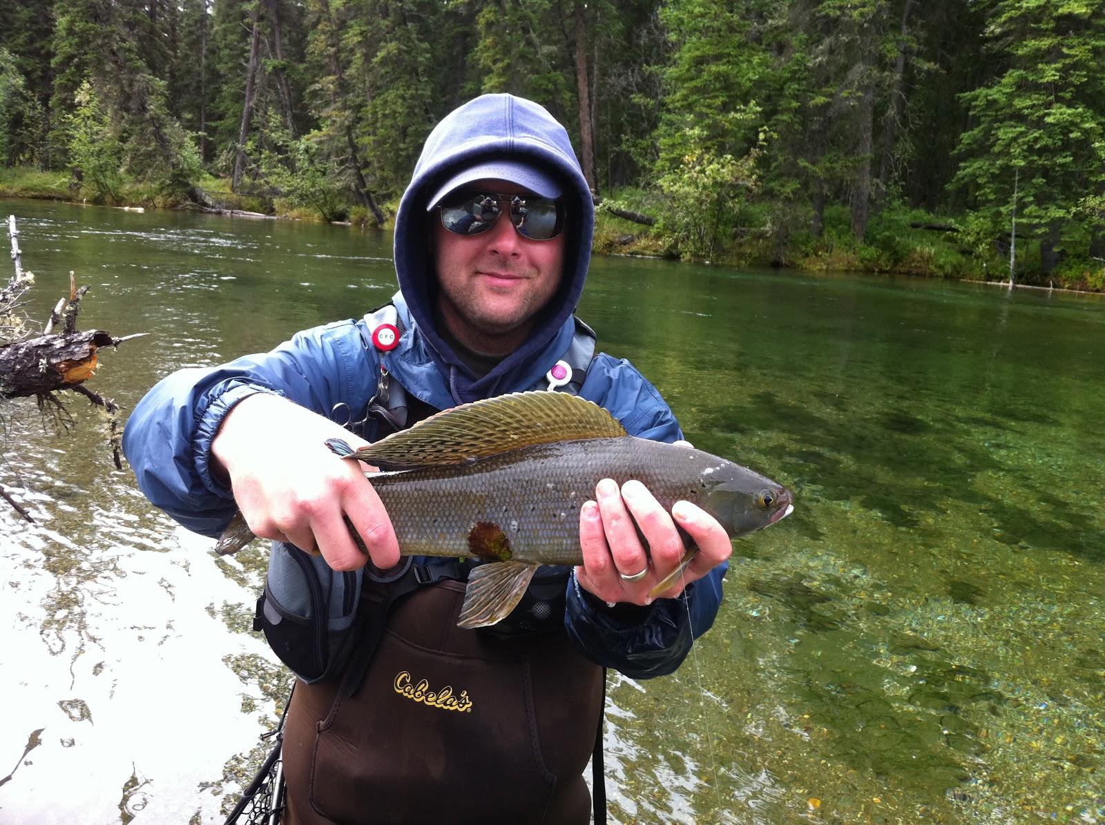 Pocono fly fishing arctic grayling alaska fly fishing for Alaska fly fishing