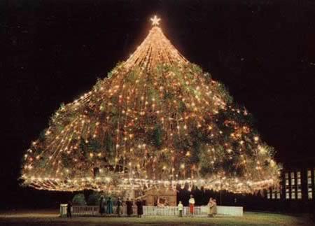 10 El arbol de navidad vivo mas grande del mundo-Wilmintong NC
