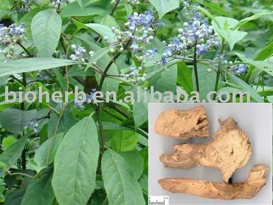 2 000 tahun obat herbal cina dapat digunakan untuk