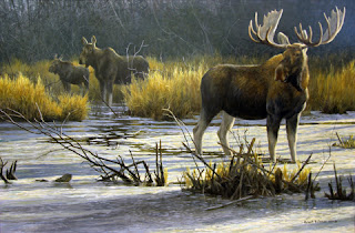 Canadian Moose image