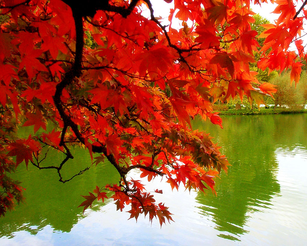 Much More Him: The Parable of the Autumn Leaves