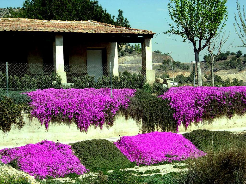 Arte y jardiner a especies tapizantes y cubresuelos en for Plantas pequenas para jardin
