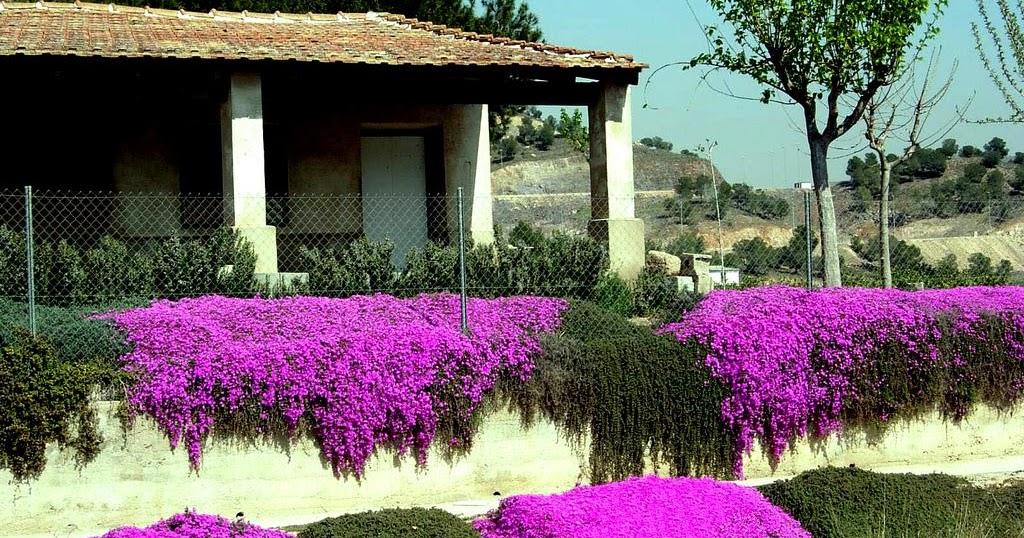 Arte y jardiner a dise o de jardines especies tapizantes - Disenos de jardineria ...