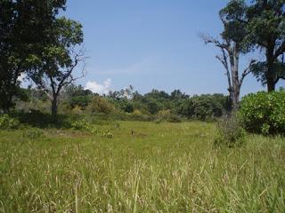 Pulau Serak 4 Dabo Singkep Kabupaten Lingga Kepulauan Riau