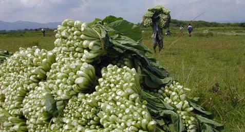 Musim Kemarau Di Malut Belum Pengaruhi Produksi Pertanian Berita
