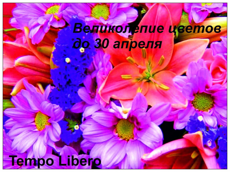 Задание от Tempo Libero