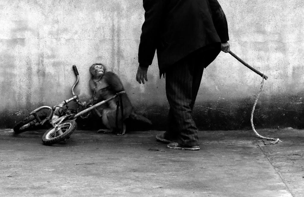World Press Photo, sajtófotó, Mads Nissen, Politiken, fotó, társadalom, sport, kultúra, Monkey Training fot a Circus