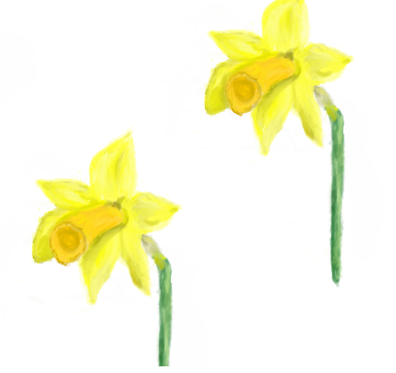 Digital painting of two yellow daffodils