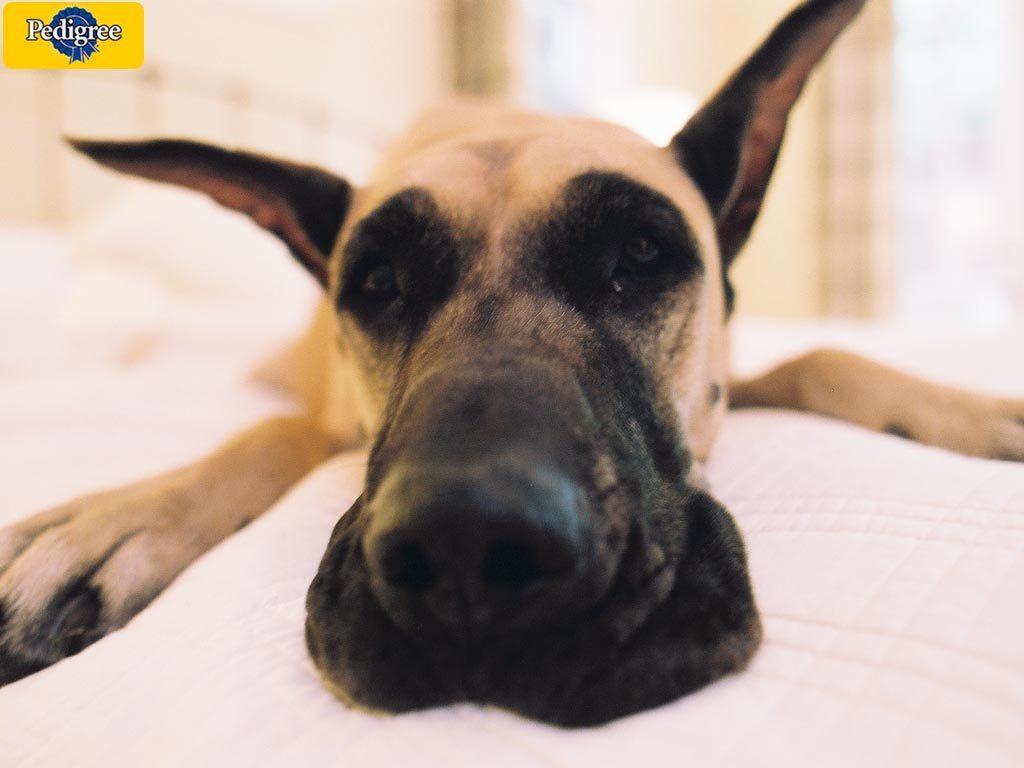 http://4.bp.blogspot.com/-vdIXtFM8Nxw/TzVeg__tWtI/AAAAAAAAADg/6VKfaw_VX7g/s1600/Great-Dane-dogs-wallpaper.jpg