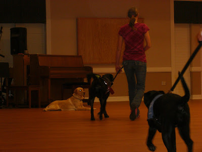 Picture of Rudy & I doing forward; there is also a dog laying down on the left a couple feet away... and Rudy leaves her