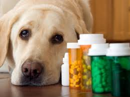 Pet Medicine, pet care