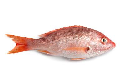 ¿Beben agua los peces?