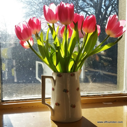 Tulips in sunlight