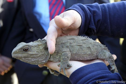 Kahori Nakagawa, co-manager, Cape Sanctuary, holding a tuatara, with boys from Hastings Boys' High School, Hastings - visit by Governor-General Lt Gen Rt Hon Sir Jerry Mateparae, to Cape Sanctuary, Cape Kidnappers, Hawke's Bay. photograph
