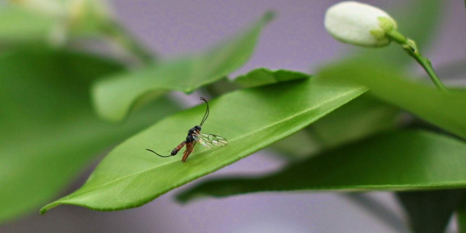 Midler mod myg