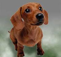 salchicha perro