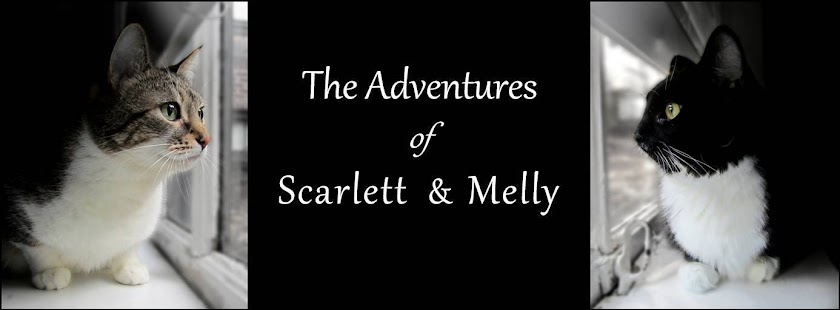 The Adventures of Scarlett and Melly