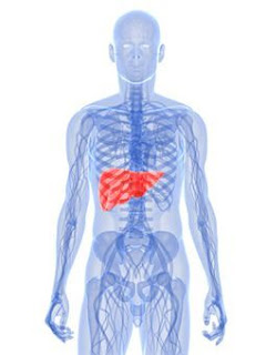 Liver Pain: Causes And Symptoms Of Liver Pain