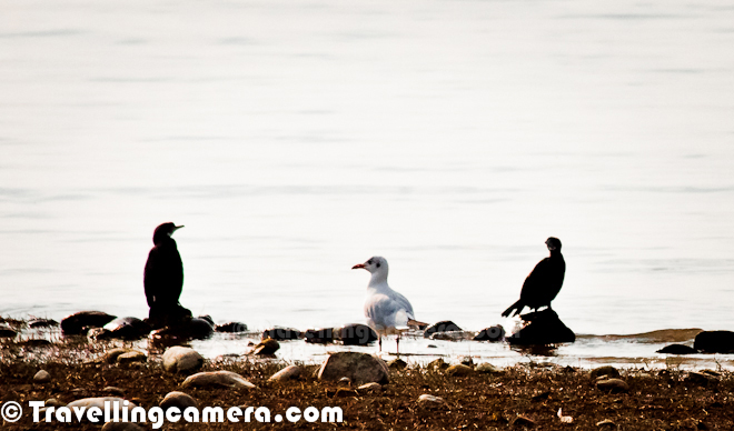 lake cormorant asian single women Download 1,603 cormorant fishing stock photos for free or amazingly low  asian african american hispanic  great cormorant fishing on a lake in the middle of.