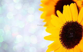 Flower images, Wide screen wallpapers,fresh flowers,Beautiful flowers,Sunflowers+with+blurry+background