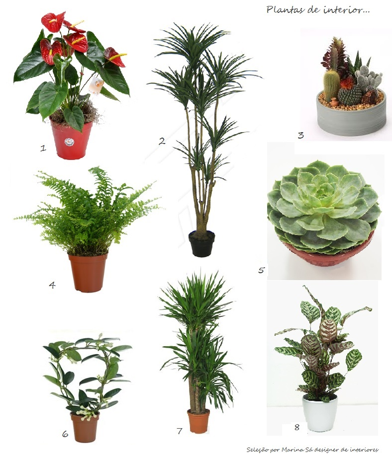 Marina s design interiores plantas para interiores - Clases de plantas de interior ...