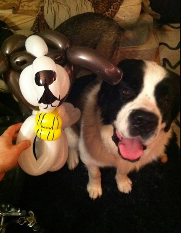 Cute dogs - part 11 (50 pics), dog and balloon dog