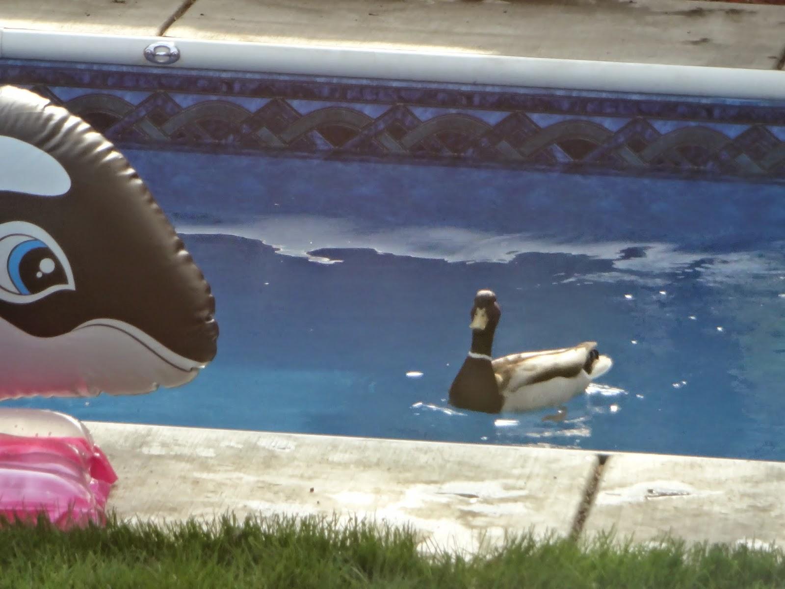 Sustainable mycology salt water pool maintenance - Saltwater swimming pool maintenance ...