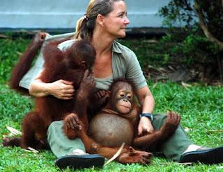 orangutan pet