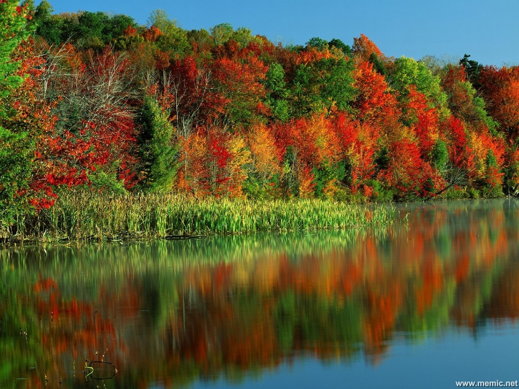 Piantati 10mila alberi dedicati all'uomo che spacciandosi per console