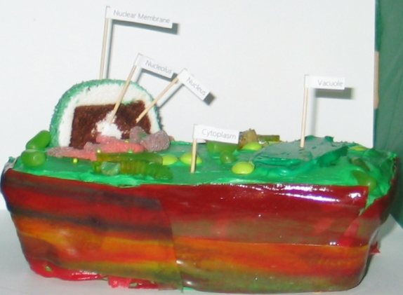 3D Plant Cell model Cake http://veronicahugger.blogspot.com/2011/02/edible-3d-model-of-plant-cell.html