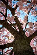 Bäume sind Gedichte die die Erde in den Himmel schreibt .