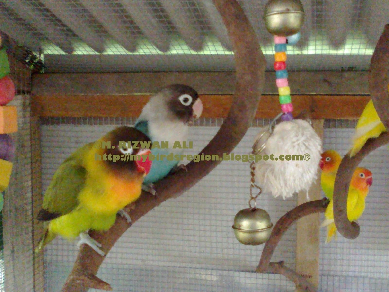 my birds region my aviary
