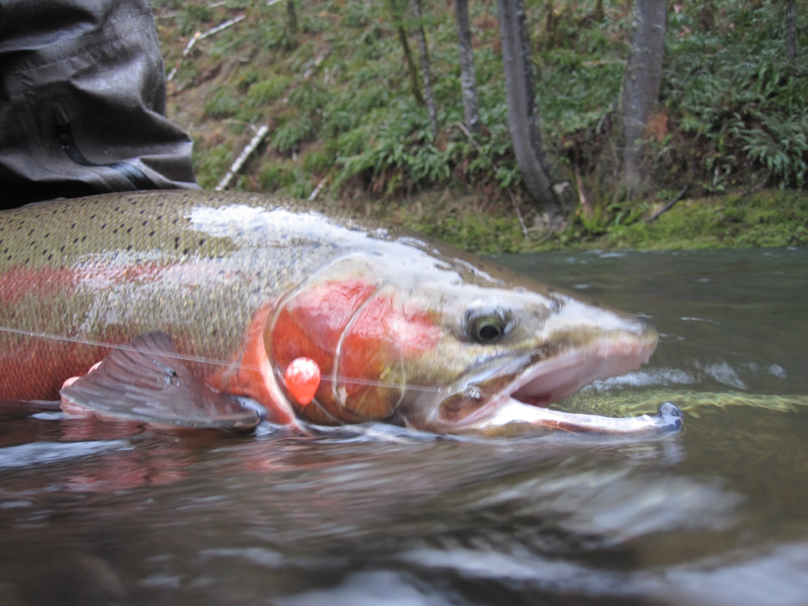 Brian marz 39 s fly fishing oregon blog quick 3 2 2012 for Bead fishing for steelhead