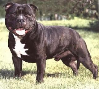 Las 10 Razas de Perros Mas Agresivas