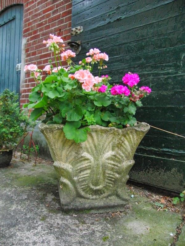 tuin, buitenleven, geraniums,