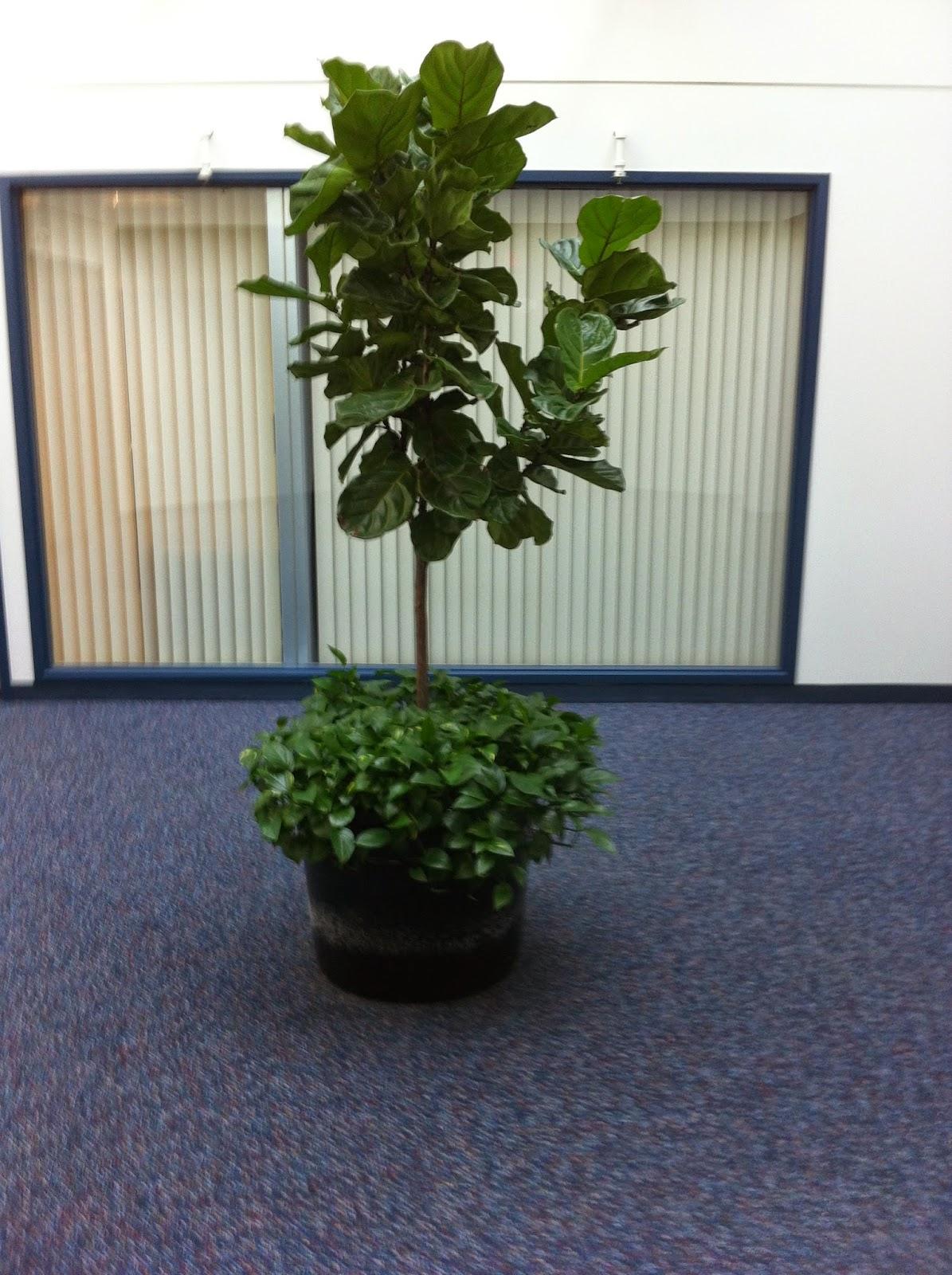 PDI Plants Blog: Plantscape Designs Inc. plants live underdressing ...