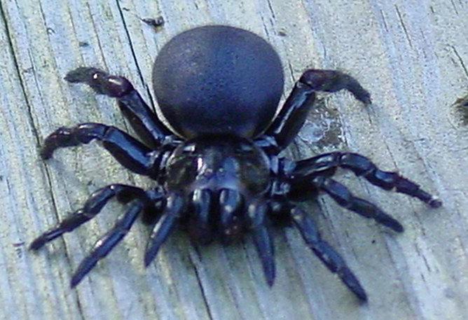 Blog fuad informasi dikongsi bersama top 10 deadliest spiders