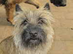 Big boy Cairn