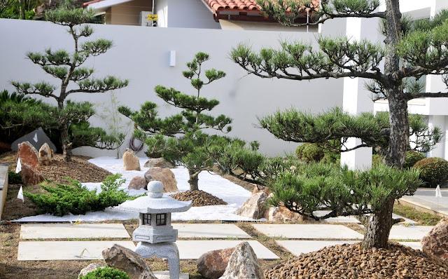 kuromatsu; jardim japones