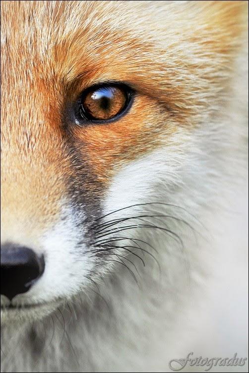 50 фото: Животный мир