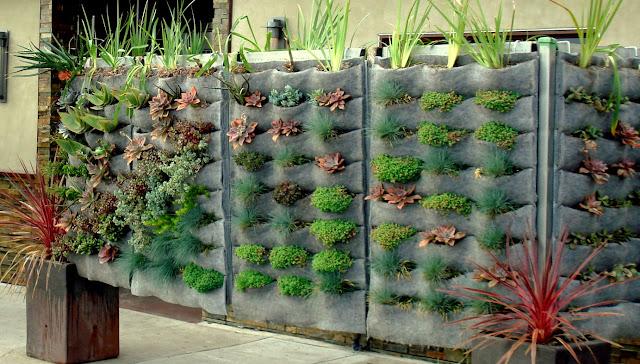jardim vertical no muro: muro foi coberto com um lindo jardim vertical com vários tipos de