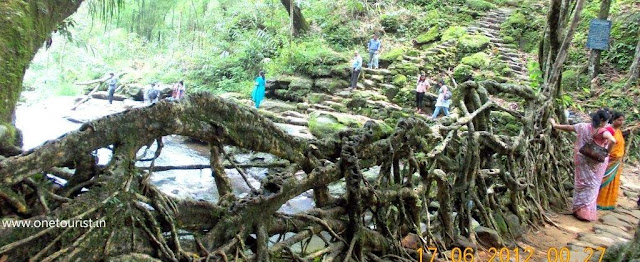 living root bridge , meghalaya