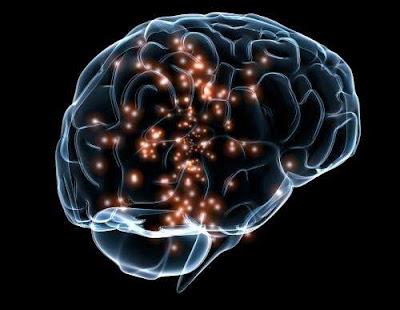 """""""Redes"""" de inteligência foram descobertos no cérebro pela primeira vez"""