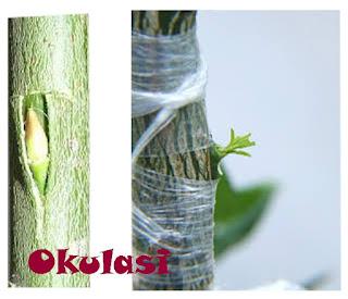 htt://kemejingnet.blogspot.com