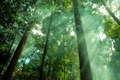 Hutan dan impian