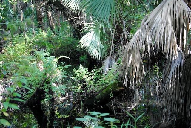 Sawgrass Nature Center Part